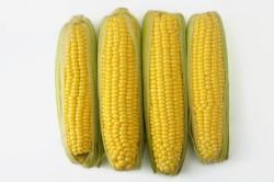Завод на Кубани запустит цех по глубокой переработке кукурузы