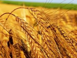 В Башкортостане будет построен комплекс по глубокой переработке зерна