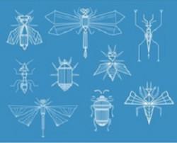Ученые РФ научились выращивать насекомых для борьбы с вредителем растений
