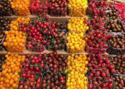 Вяленые помидоры с куста и другие агротехнологии Израиля