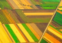 Bayer направит 2,5 млрд евро на развитие сельхознаправления