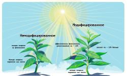 Вторая зеленая революция: ученые «взломали» фотосинтез