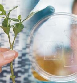 Членам правительства Архангельской области представили проект развития регионального биоресурсного и биотехнологического кластера