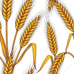 Эффект стабильности: решить многие проблемы агропромышленного комплекса может глубокая переработка зерна