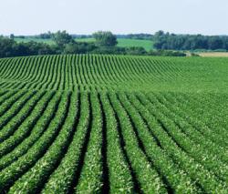 Monsanto и Bayer ждут поддержки от производителей сои