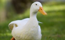 Селекционно-генетический центр по птицеводству появится в Томской области