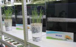 В Башкирии создали биотехнологию, повышающую урожайность зерна на 25%