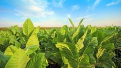 Ученые придумали, как улучшить растения, без генетических изменений