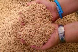 Липецкая компания «Новые Биотехнологии» увеличит производство кормового белка из личинок мух