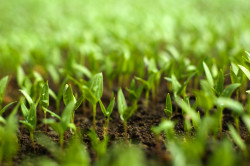 Госдума приняла в I чтении законопроект об органическом сельском хозяйстве