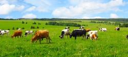 Состоялся круглый стол «Биотехнологические разработки в животноводстве»
