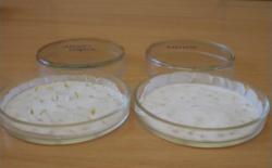 Уфимские ученые создали из водорослей стимулятор роста для растений