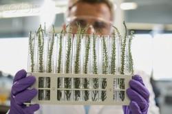 Международная лаборатория биотехнологий в Белгороде займется проблемами биогаза и селекции