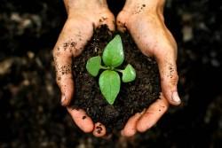 В Сколково представят масштабное исследование органического сельского хозяйства и биологизации земледелия в России