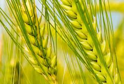 15-16 ноября 2017 ⇒  Международный Форум и выставка по глубокой переработке зерна, промышленной биотехнологии и биоэкономике «Грэйнтек-2017»