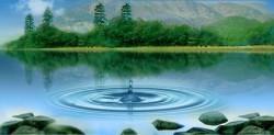 Фильтрация сточных вод может снабдить кормовую отрасль новым источником протеина