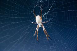 Будущее за шелком из паутины: история материала, который учились производить тысячи лет