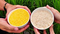 Китай станет мировым лидером на рынке ГМО