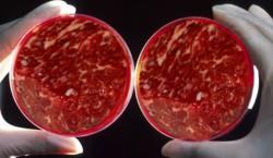 Искусственное мясо выходит на международный рынок
