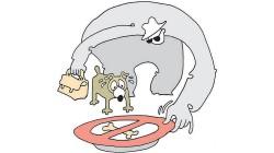 Россия может ограничить импорт ингредиентов для производства кормов