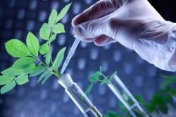 Россия может занять ведущие позиции в мировой биологизации агробиотехнологии