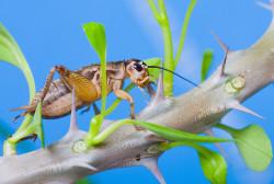 Финны экспериментируют с пищей, изготовленной из гусениц и сверчков