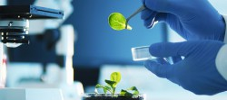 Recent biotechnology developments and trends in the Russian Federation .