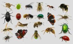 С 1 января 2018 года в Евросоюзе утверждён список съедобных насекомых