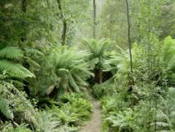В Австралии дикие растения будут использоваться как компоненты комбикормов