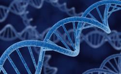 В Германии выделят 17,6 млн евро на расшифровку геномов малоизученных видов