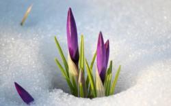 Ученые из России и Сингапура обнаружили механизм адаптации растений к холоду