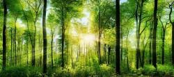 Состоялось VII заседание Межведомственного научно-координационного совета  «Центра лесных биотехнологий»