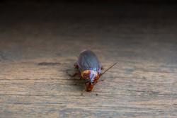 Сибирские ученые выяснили, почему насекомые привыкают к новым инсектицидам