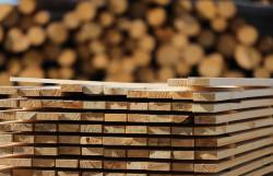 Японские ученые собираются использовать древесину для производства автомашин