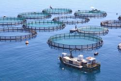 Великобритания: Студенческий старт-ап получил 900 000 фунтов стерлингов для проекта в области аквакультуры