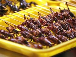 Снеки из кузнечиков вытесняют мясо: Заменители мяса, дефицит пшеницы и назревающая «война» между бразильскими и американскими фермерами