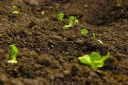 Экологи ТГУ разработали способ использования отходов пивного производства в качестве удобрения