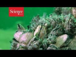 Полимер помешает моллюскам прикрепляться к подводным поверхностям
