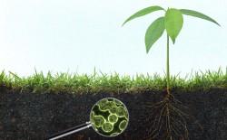 Евросоюз: Микроорганизмы заменят пестициды и удобрения
