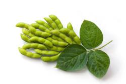 На Алтае хотят нарастить производство высокопротеиновых сортов сои