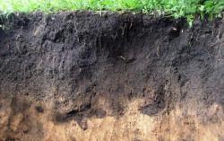Объяснено накопление опасного токсина в почве и ячмене