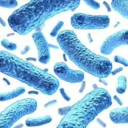 Новый штамм пробиотиков может быть полезен при использовании в комбикормах