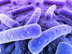 ГМО бактерии в комбикормах пугают Европу