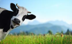 В вологодских сельхозпредприятиях прошли испытания биопрепаратов