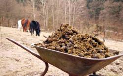 Китай выделит субсидии на переработку животного навоза в органические удобрения
