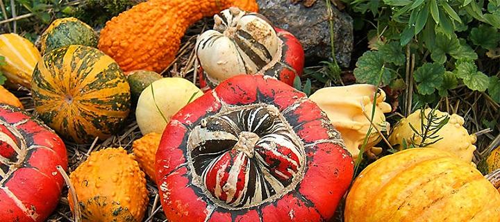 pumpkin-800x525