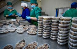 Российские ученые благодаря электронам увеличили срок хранения рыбных пресервов в 4 раза