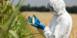 РАН: биотехнологии станут одним из ключевых направлений развития аграрной науки в РФ