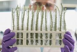 Началась новая генно-инженерная революция в агропроме
