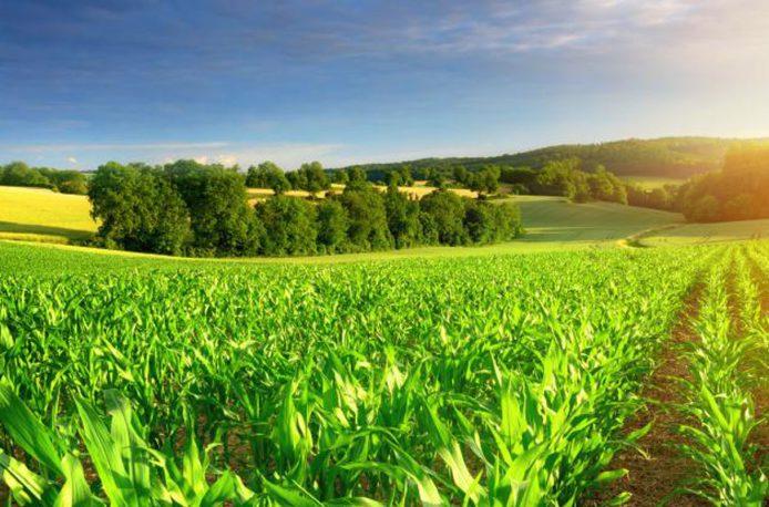 agriculture-34qpk4x9lxibddsqivwyyo